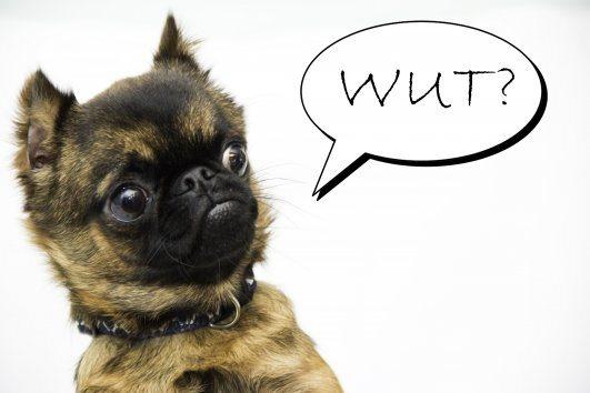 wut-dog_531x354