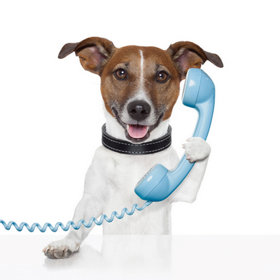 call center dog